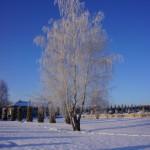 foto_samogon60
