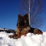 foto_samogon68