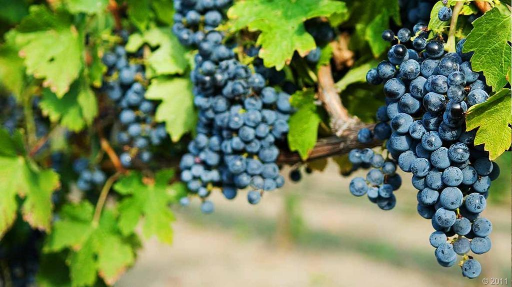 black_grapes_03